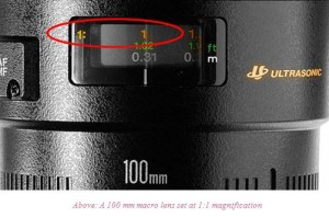 magnification ratio in dental photography